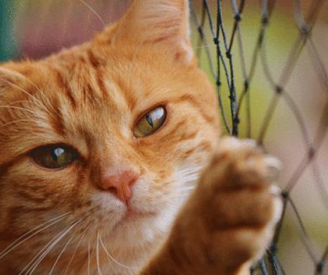 Kitty Corral Cat Fence Kit