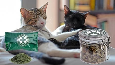Meowijuana Catnip and Toys