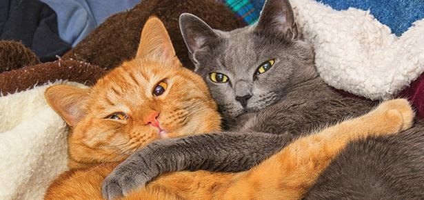 The importance of group scent in a multi-cat home